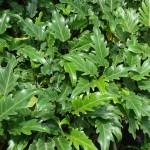 vivero-costa-rica-plantas-59
