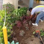 vivero-flora-vitae-mantenimiento-10