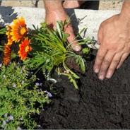 Consejos para sembrar plantas en un jardín